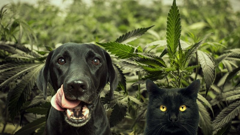 CBD AND ANIMALS