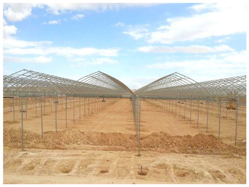 Desert joy 4 gabes tunisia turn key greenhouse 7
